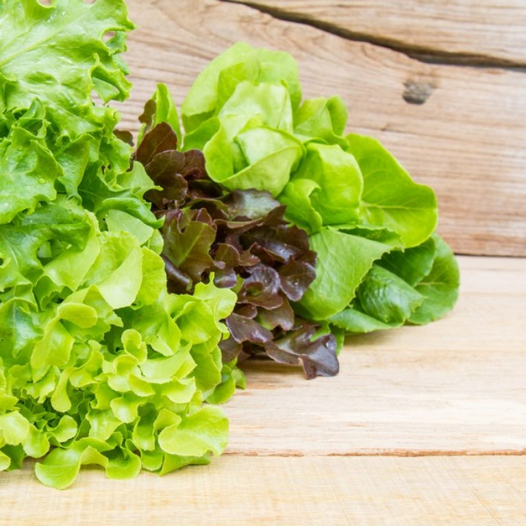 Vegetables for salad consisting of Cos lettuce, Butter head, Red oak, Green oak and Coral on wood table.